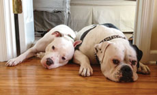Rebecca Mills says Remy (left) and Spike are as close as siblings.