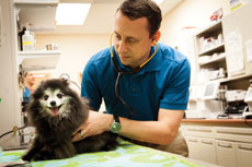 Dr. Evan Feinberg of Stevenson Village Veterinary Hospital says prevention is the key to pet health. (Justin Tsucalas)