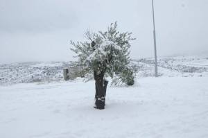 The city of Efrat is  blanketed in white. Aryeh Savir/Tazpit News Agency