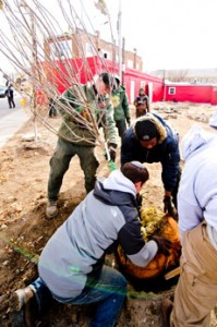 Repair the World fellow Avi Sunshine (kneeling) helps others from Baltimore Civic Works plant an apple tree at an urban lot in the  Waverly area of Baltimore. Two fellows are working with Civic Works to transform vacant urban lots into community green spaces. (David Stuck)