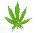 010915_marijuana_sm