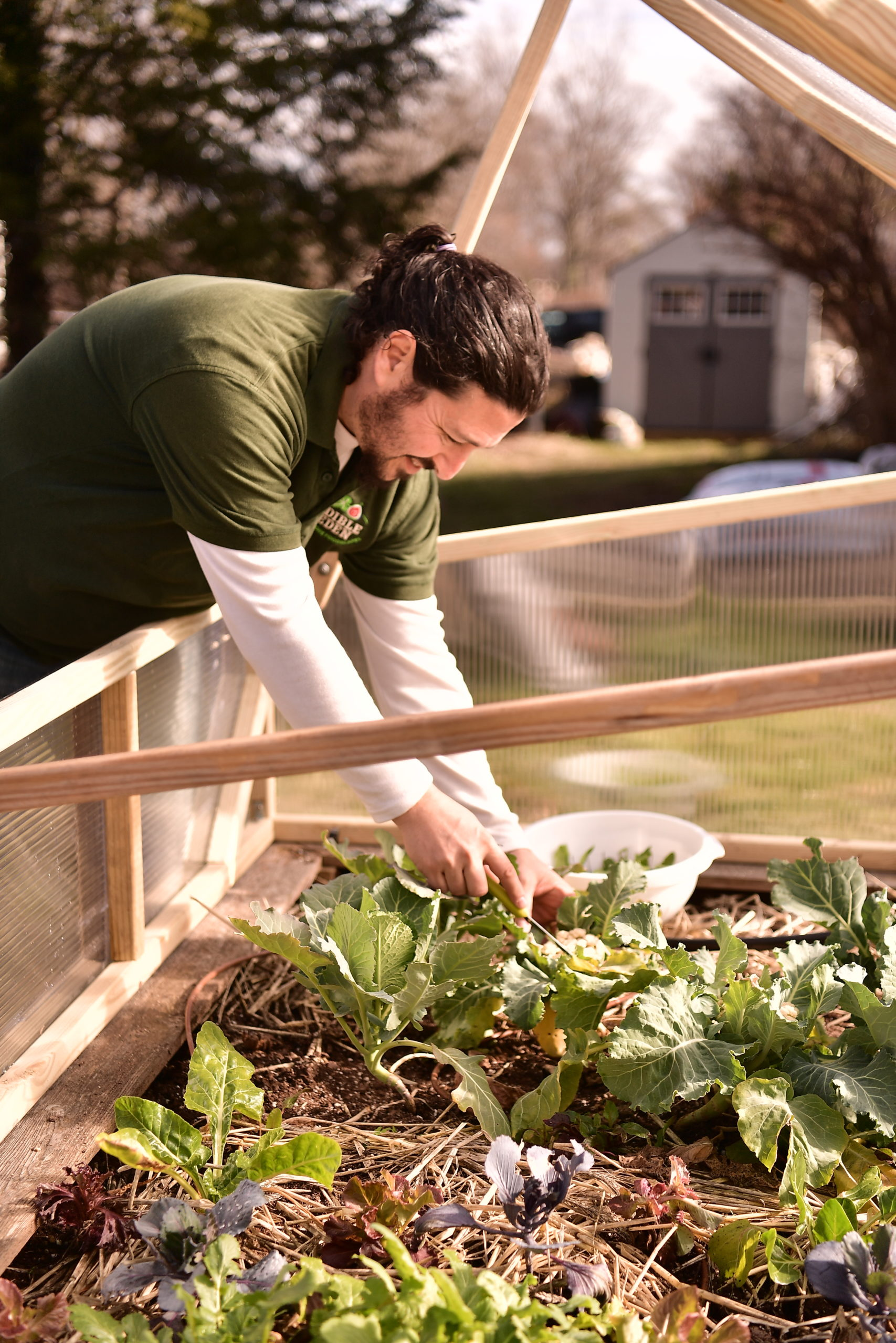Rosenstein harvests greens from his cold frame.