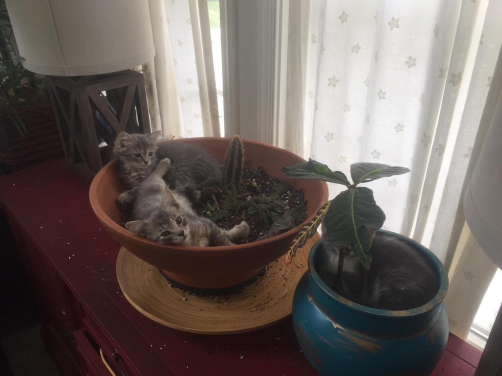 Kittens in houseplants.