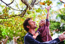 A little girl picks apples with her father